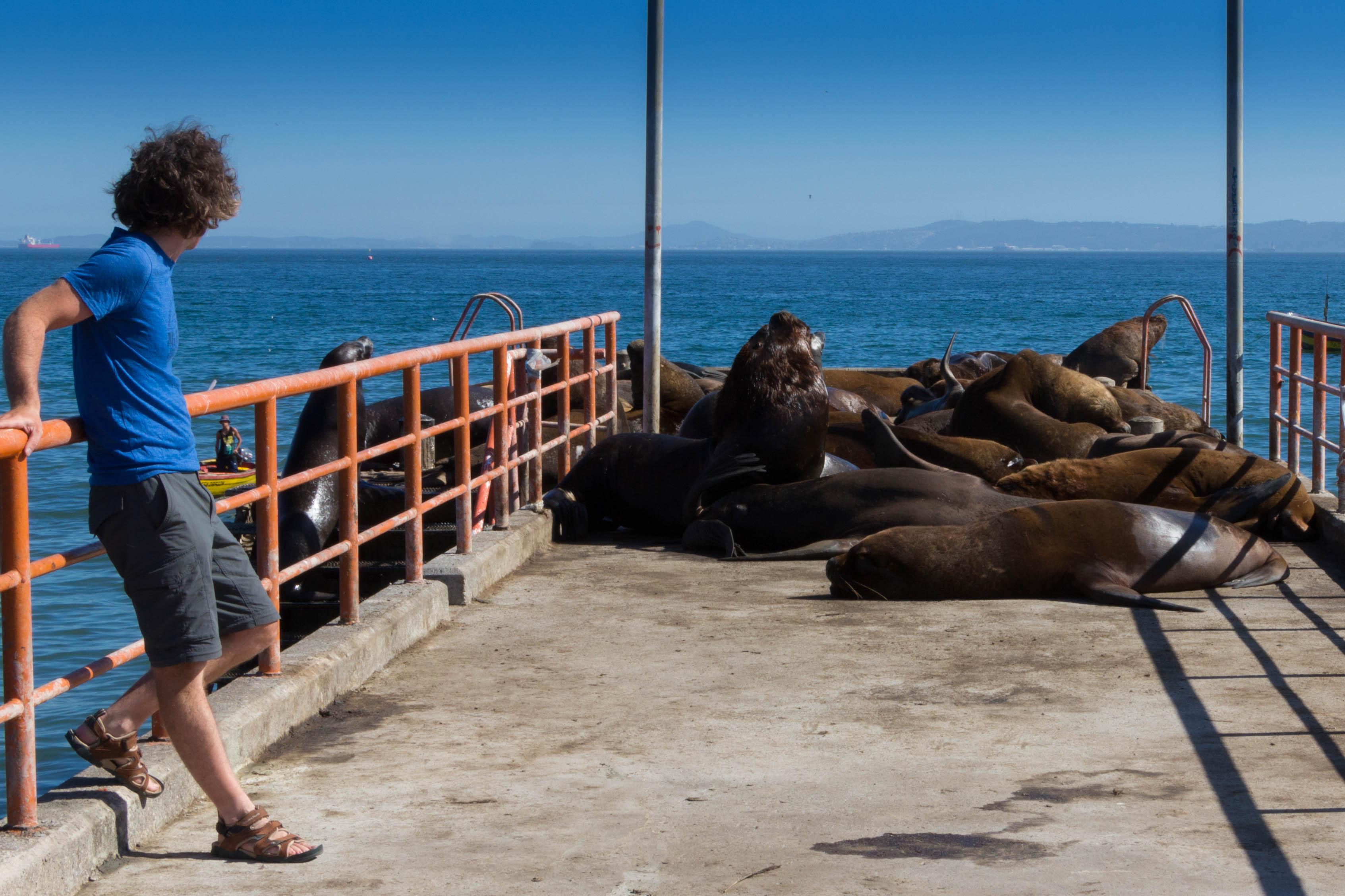 A Tomé, les lions de mer sont juste au bout de la jetée !
