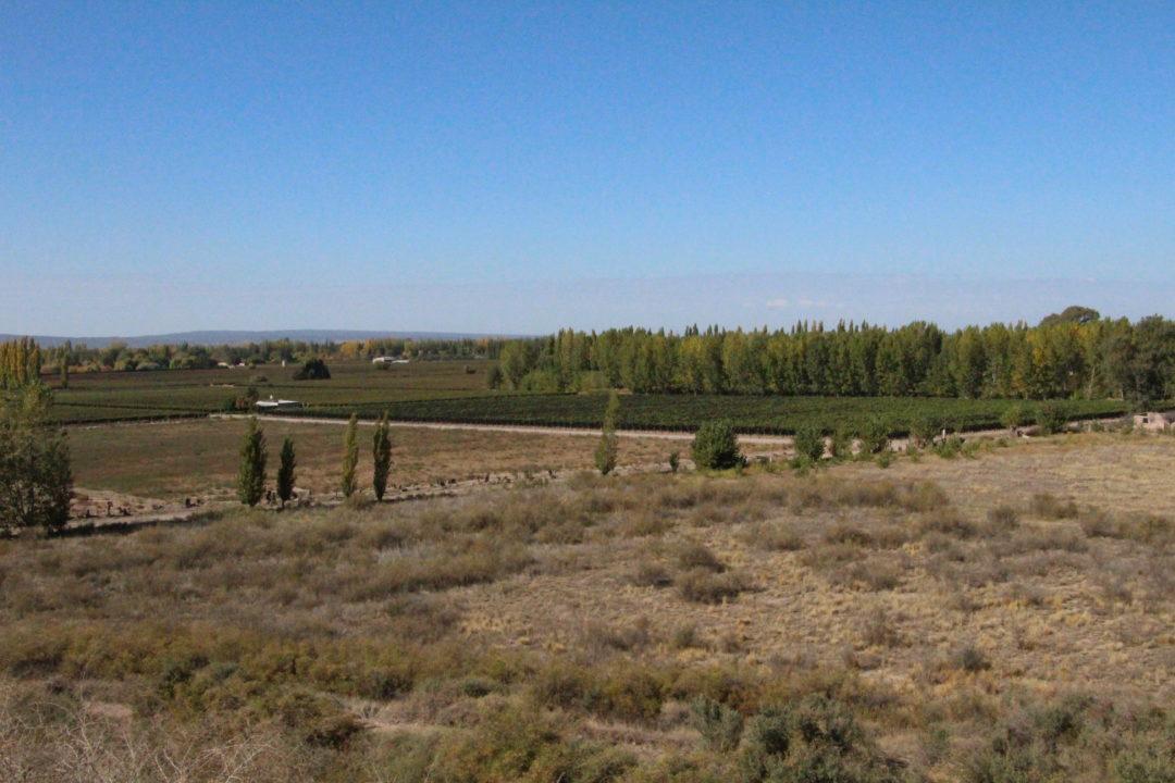 Les vignobles de Mendoza
