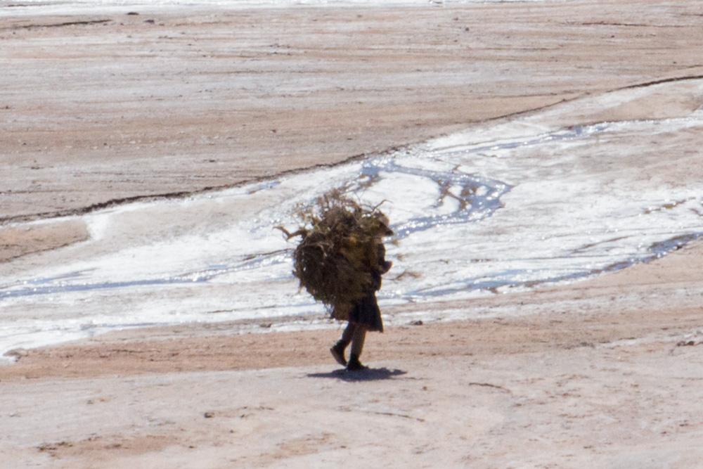 Une dame qui porte du bois sur son dos, quelque part dans le sud de la Bolivie