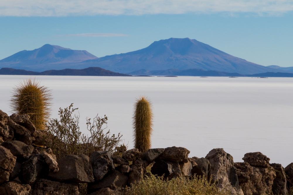 L'île Incahuasi et ses cactus géants, au milieu du Salar d'Uyuni
