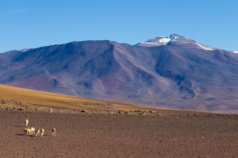 A notre entrée en Bolivie, par le Sud-Lipez, accueillis par les vigognes :)