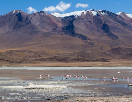 La Laguna Hedionda et ses flamants roses, dans le Sud-Lipez