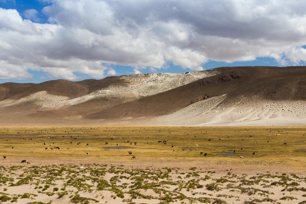 Paysage de la vallée du Siquili, avec des lamas, entre Uyuni et Potosi