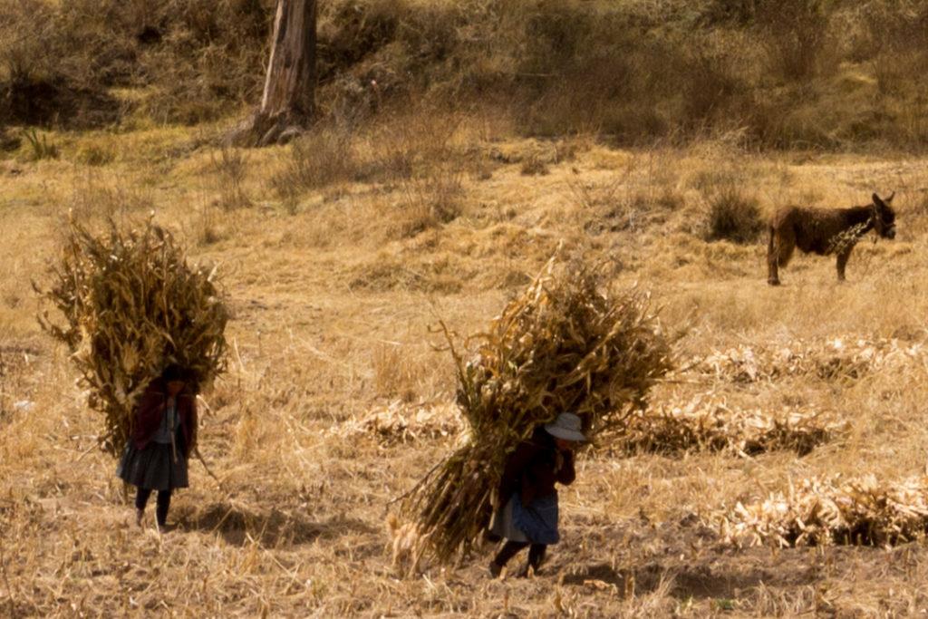 Sur la route entre Juliaca et Cusco, des péruviens qui portent du maïs