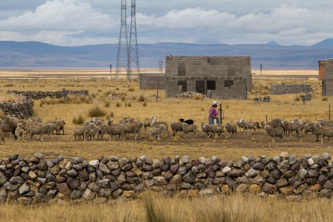 Entre Huancayo et Cerro de Pasco - La bergère qui a retrouvé son agneau