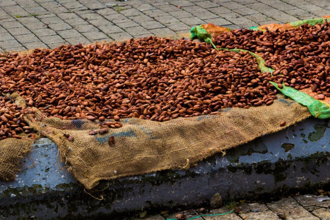 Otanche - Sechage des fèves de cacao