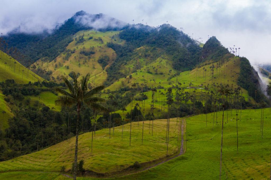 Vallée de Cocora - Paysage