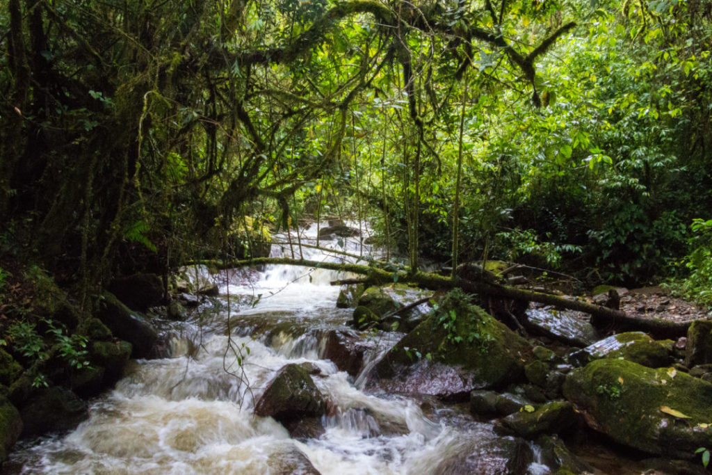 Vallée de Cocora - Rivière dans la forêt tropicale