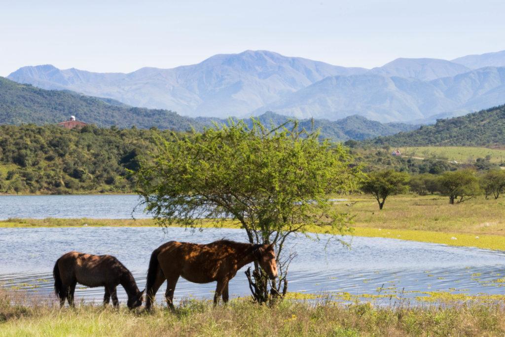 Sur la RN9 après Salta, nous roulons dans la verdure : il y a même des petits lacs avec des chevaux !