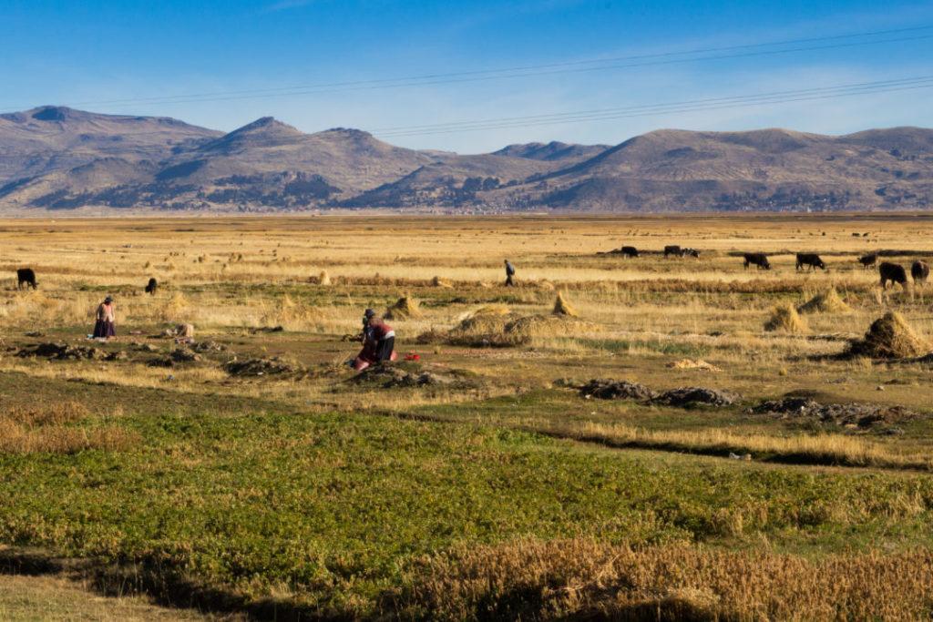 Paysage agricole au bord du lac Titicaca