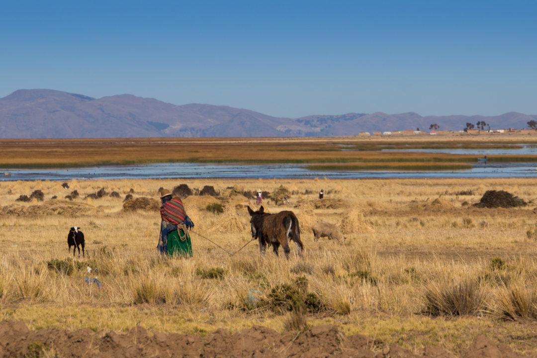 Une Bolivienne qui promène son âne, au bord du lac Titicaca