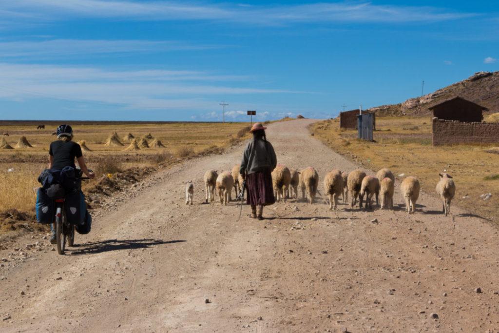 Péninsule de Capachica - Pauline et les moutons