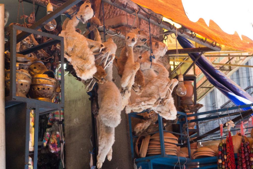 Les fœtus de lama, au marché des sorcières, à La Paz