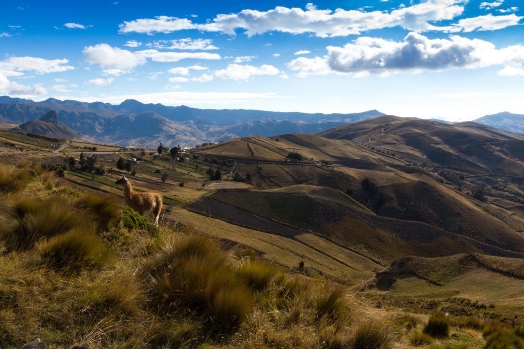 Quilotoa Loop - Paysage avec lama