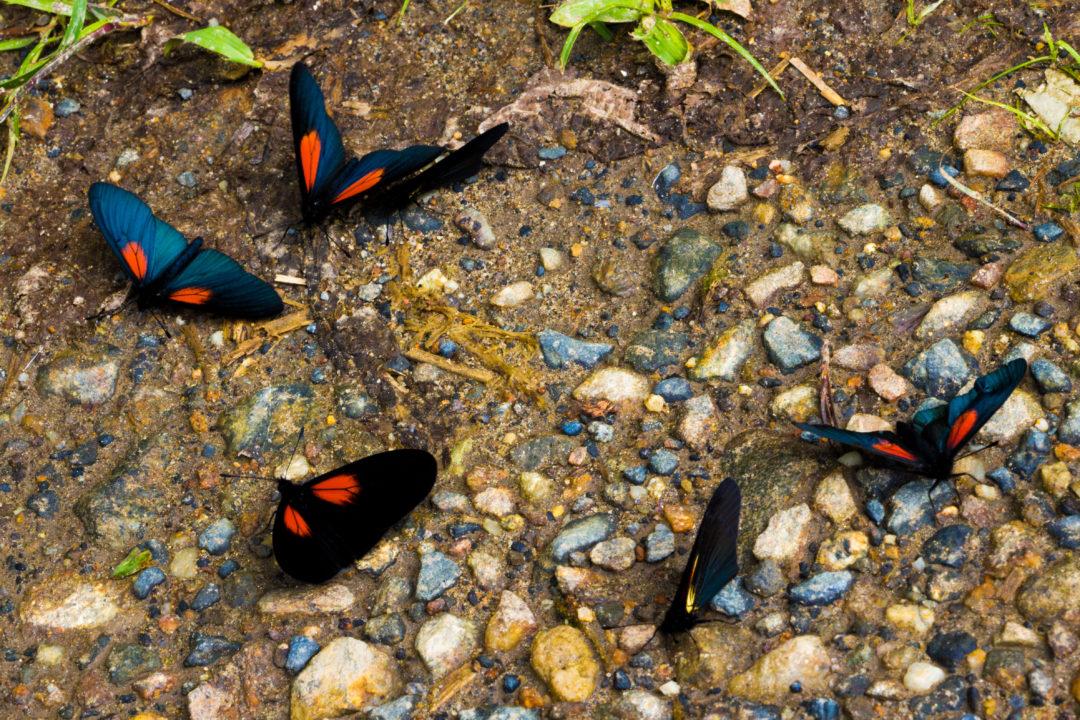 Guatapé - Papillons