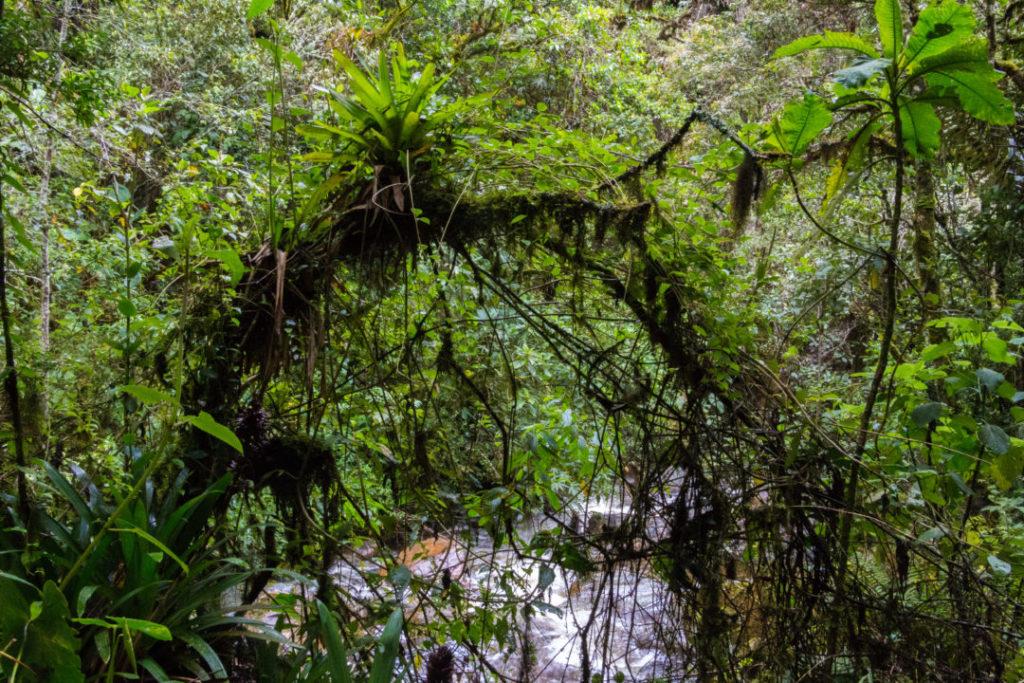 Vallée de Cocora - Forêt tropicale
