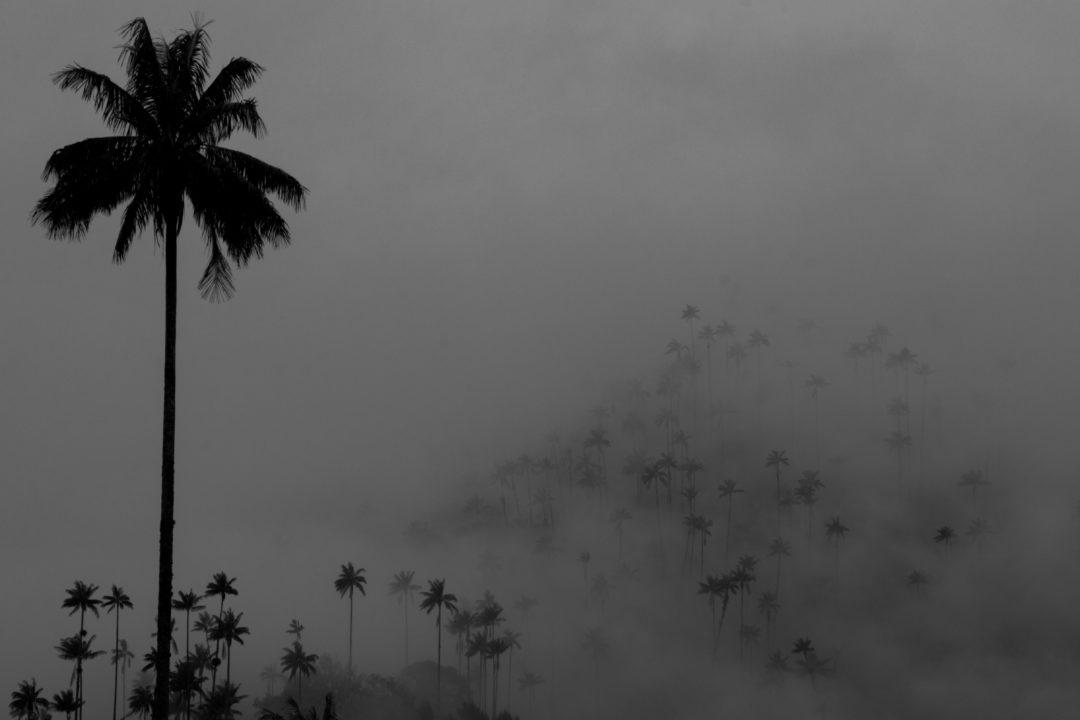 Vallée de Cocora - Palmiers dans les nuages