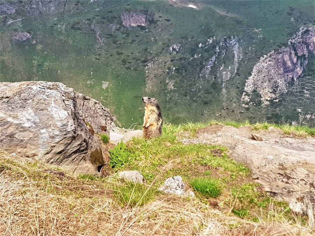 Col de l'Iseran - Marmotte